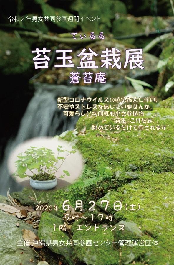 6/27 てぃるる苔玉盆栽展 入場無料 (6月25日)